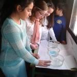Cristalización de sales. Tercer Ciclo (15)
