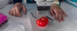 Laboratorio 4º primaria (18)