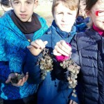 Cogiendo uvas 2