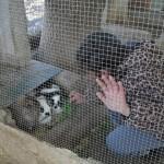 VISITANDO ANIMALES  (8)