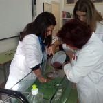 Velas.Laboratorio (4)