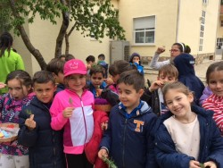 recogiendo romero (4)