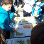 Dia de Fruta 13-11-15 (5)