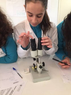 Laboratorio Julia 1ºESO