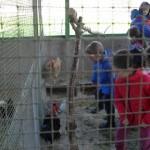 VISITANDO ANIMALES  (3)